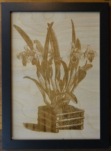 newsflash1-P3-1 Framed Botanical Prints on Wood